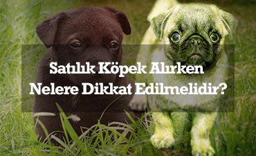 satılık köpekte dikkat edilmesi gerekenler