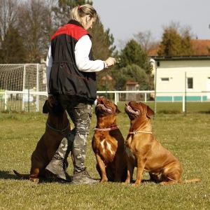 eskişehir köpek eğitimi