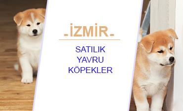 İzmir satılık yavru köpekler ve izmir satılık köpekler