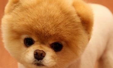 izmir satılık yavru köpekler 11