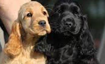antalya satılık köpek 6